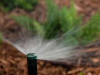Sprinkler head and water